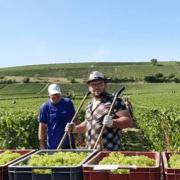 Høst i Champagne
